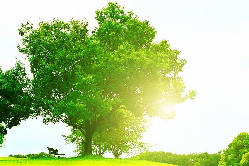 木に差す光